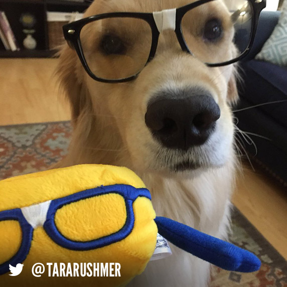 A dog name Murphy wears black glasses and sits in front of a Curdis plush toy.