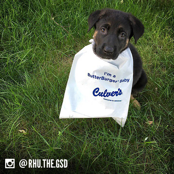 "A dog name Ruby Rhu sits in a field of grass and wears a ""I'm a ButterBurger Baby"" bib."