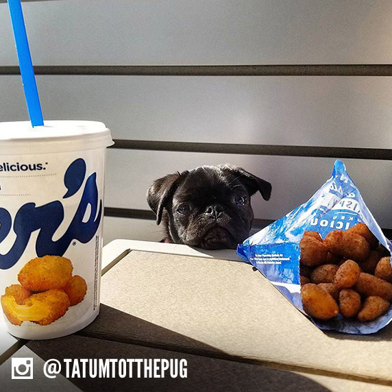 A dog name Tatum sits between a Culver's cup and a bag of Cheese Curds.