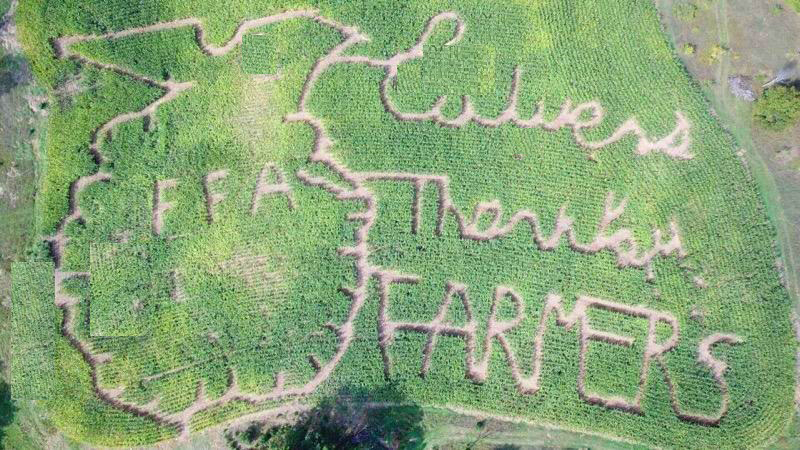 Aerial view of the Marshall, MI, Culver's Thank You Farmers Project corn maze