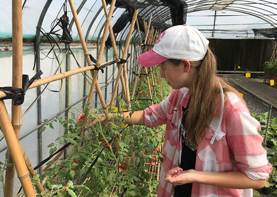 Hailey tends to tomato plants in a greenhouse.