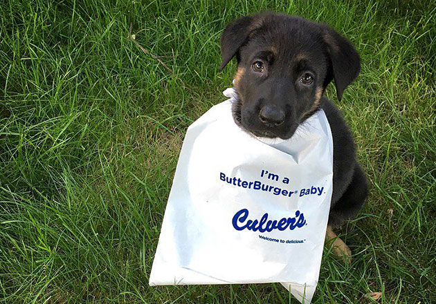 "A dog wearing a ""I'm a ButterBurger Baby"" bib in a field of grass."
